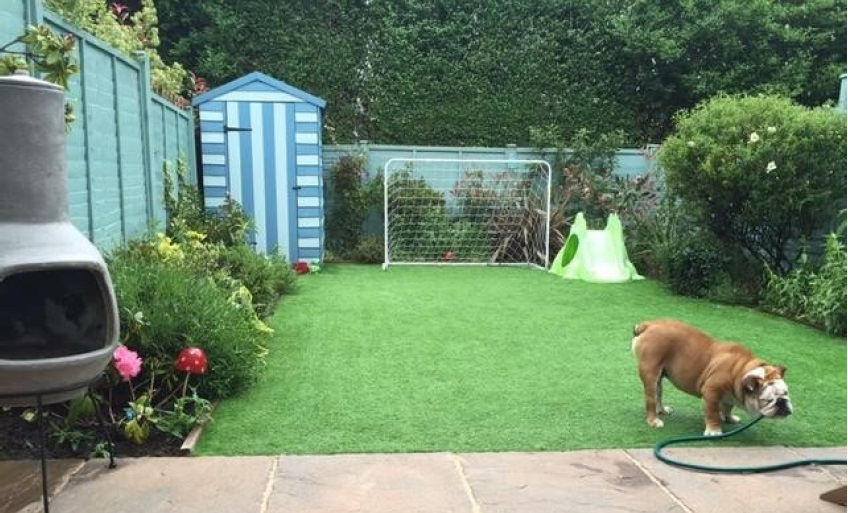 dogs on fake grass coventry